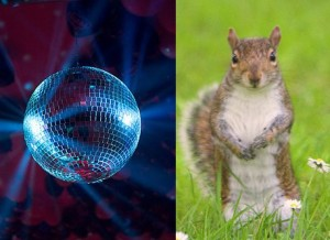 Distractions: shiny object and squirrel